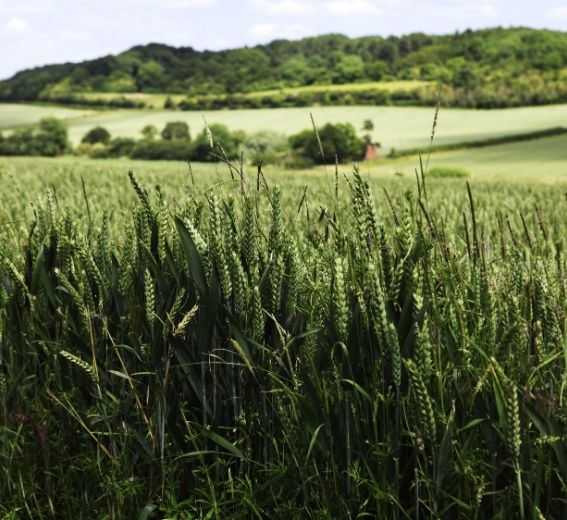 Arable land England
